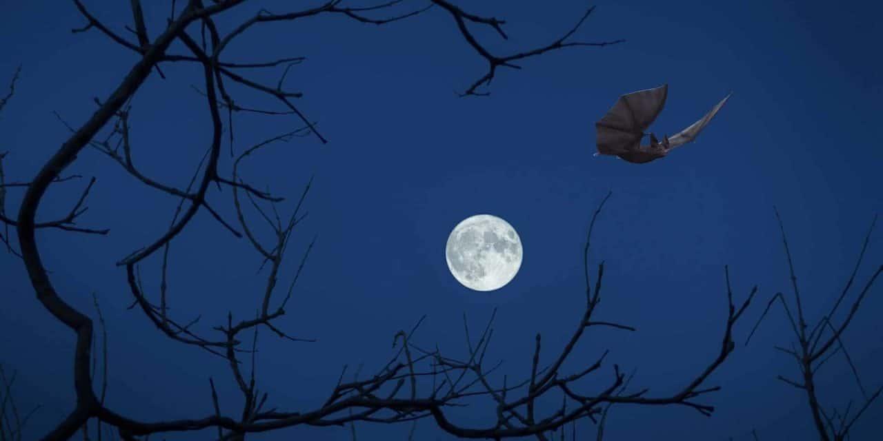 Halloween im schlossORTH