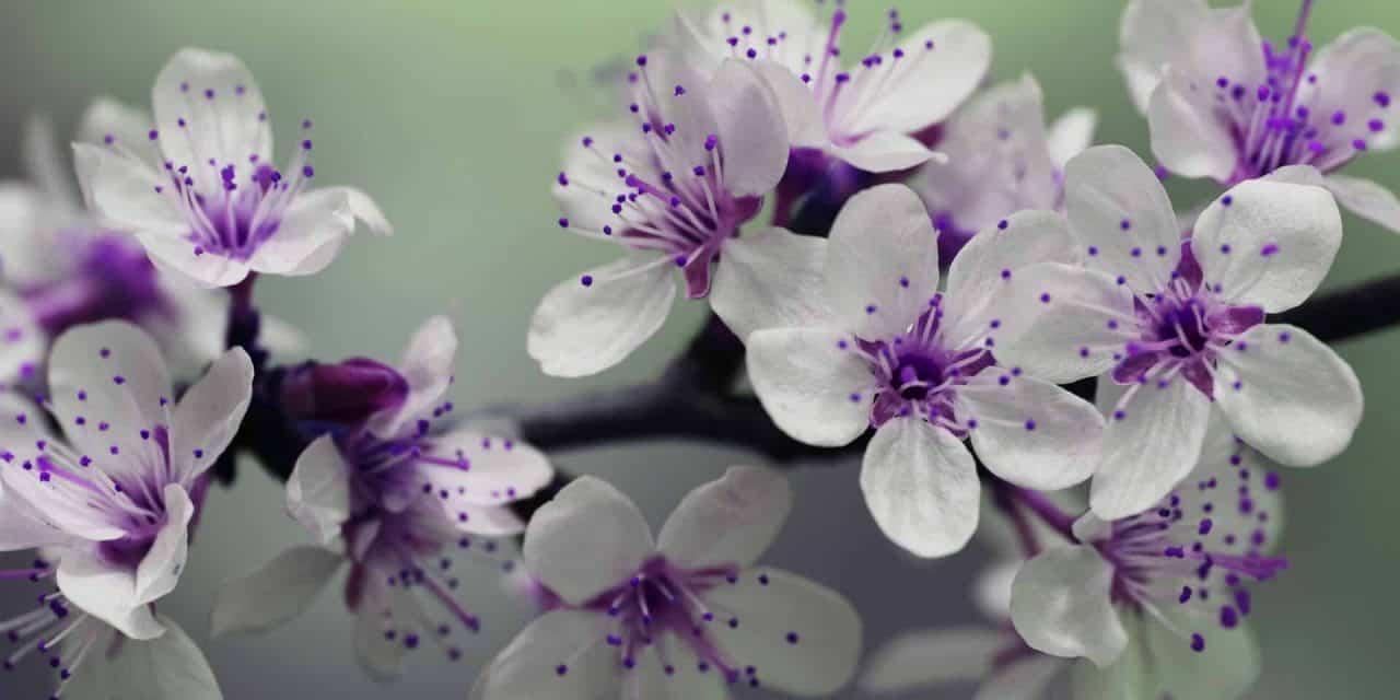 Vortrag: Essbare Blüten und ihre Verwendung